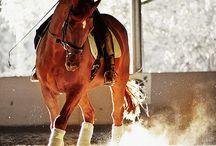 Riding&Horses