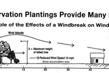 wind break