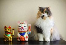 Lucky Cats / by Evil Cat