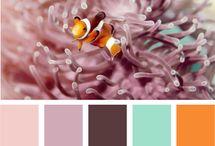 colours / by Sandra Orlando