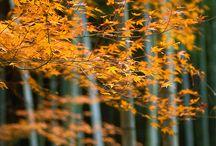 紅葉 / 紅葉がキレイ