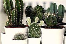plants & decor