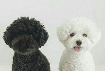 Pets♡♡♡