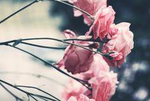 flowers leaves plants animals