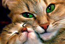 Eco-Animals / Z miłości do zwierząt i środowiska