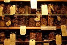 bylinkové muzeum