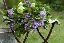 Colourful Flora