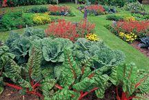 Gardening / by Ethel Stewart