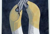 Biologi : Fåglar