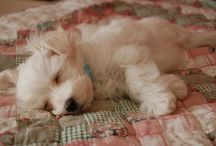 •♥✿♥• Puppies •♥✿♥•