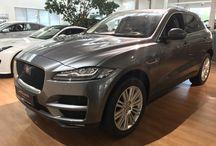 Jaguar / Fotos, Angebote und Berichte über Jaguar