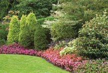 Continuously Blooming Perennials / Create a garden that will bloom year-round with Perennials.