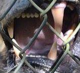 Sunken Jungle Trek / Sunken Jungle Trek Tour at Dade City's Wild Things