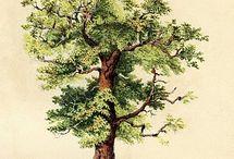 T R E E S / trees / by Jesse Petersen