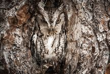 Wildlife Photos-Best of Nat Geo