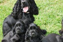 Filhotes de cachorro