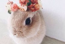 Ananimals❤❤ / Cute Animal photography ✨