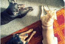 Blog Series - My Life With Dogs