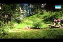Videos aus dem Berchtesgadener Land / Erlebe das Berchtesgadener Land hautnah mit unseren Videos.