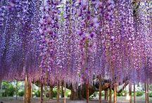 Parque floral