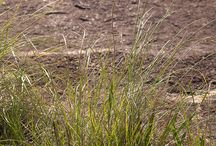 Indigenous Plants: Zimbabwe