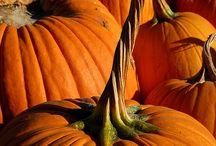 Pumpkins, Pumpkins, and More Pumpkins! / by Myrti Freitas