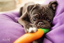Doggies / Cute dogs