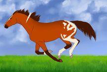 Paarden video' s
