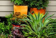 Gardening: Creative containers / container gardening