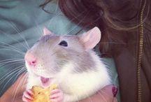 애완 동물 쥐