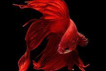 Ryby / gady / płazy