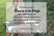 Favorite Dog Quotes / Philosophers, authors, musicians, artists, statesmen, actors, have all waxed poetic about the dog. Here are some of our favorites.