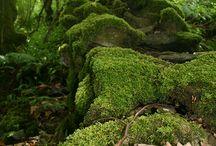 The Forest Fairy - Moss/Mushroom Monday