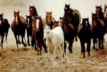 Equidés / Chevaux, ânes et zèbres, en voilà une drôle de famille mais pourtant.... qu'est ce qu'ils sont beaux !!