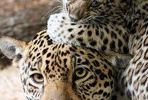 Animals / Sobre natureza e os animais que eu amiro
