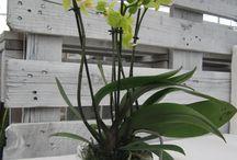 Wedding inspiration: un matrimonio a base di orchidee / Guardale sul catalogo della Florpagano www.florpagano.com http://www.florpagano.com/it/detail/3/3/piante-fiorite-e-orchidee