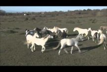 Amazing horse videos
