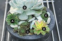 little gardens / potting ideas / by Molly Stankovsky