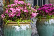 Outdoor flowers and plants