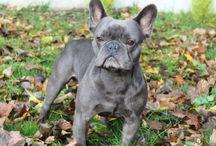 kutyafajtákról, amit még tudni érdemes / Itt azokat a cikkeket találod, amik az egyes kutyafajták viselkedését, jellemzőit mutatja be kicsit részletesebben.