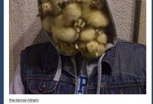Ducks for Jess
