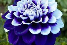 Blomster♡