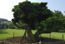 Flora / Bomen, struiken en planten. Nederland, België en