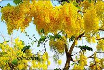 FLORES ✻ღϠ₡ღ✻ (¯`✻´¯) `*.¸.*✻ღϠ₡ღ¸.✻´´¯`✻.¸¸ღ ..`*.¸.*´~ ✿¸.•*Ƹ̵̡Ӝ̵̨̄Ʒ*•.. .*•~✿ / Natureza, plantas, flores etc..  ✻ღϠ₡ღ✻ (¯`✻´¯) `*.¸.*✻ღϠ₡ღ¸.✻´´¯`✻.¸¸ღ ..`*.¸.*´~ ✿¸.•*Ƹ̵̡Ӝ̵̨̄Ʒ*•.. .*•~✿