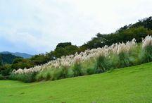 松川湖 奥野ダム / 松川湖・奥野ダム 奥野ダムは、伊東大川(通称:松川)の上流に治水・飲料水の確保のために作られたダムです。 奥野ダムによって生まれた湖が松川湖です。 http://itospa.com/nature_park/np_matukawako/