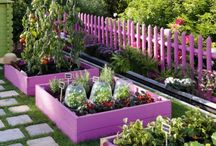 Gardening and Outdoor Living / Garden, yard, porch and deck. / by Cat Thomas