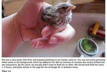 Fugler og dyr