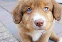 """""""Jeg vil ha en liten hund"""""""