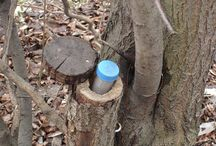 "Geocaching ideas / My boyfriend and I LOVE geocaching :)  Geocaching is an outdoor recreational activity, in which the participants use a GPS receiver or mobile device and other navigational techniques to hide and seek containers, called ""geocaches"" or ""caches"" in the world.  Geocaching shares many aspects with benchmarking, trigpointing, orienteering, treasure-hunting, letterboxing, and waymarking. Its lofts of fun and a entertaining Way to spend time outdoors :)"