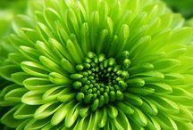 GREEN WITH ENVY / by Gail Chesham